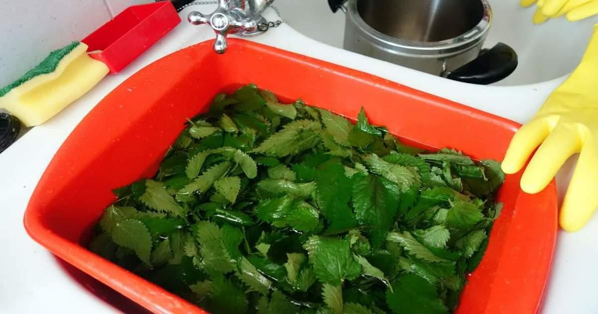 Ortiche in cucina: proprietà benefiche e gusto