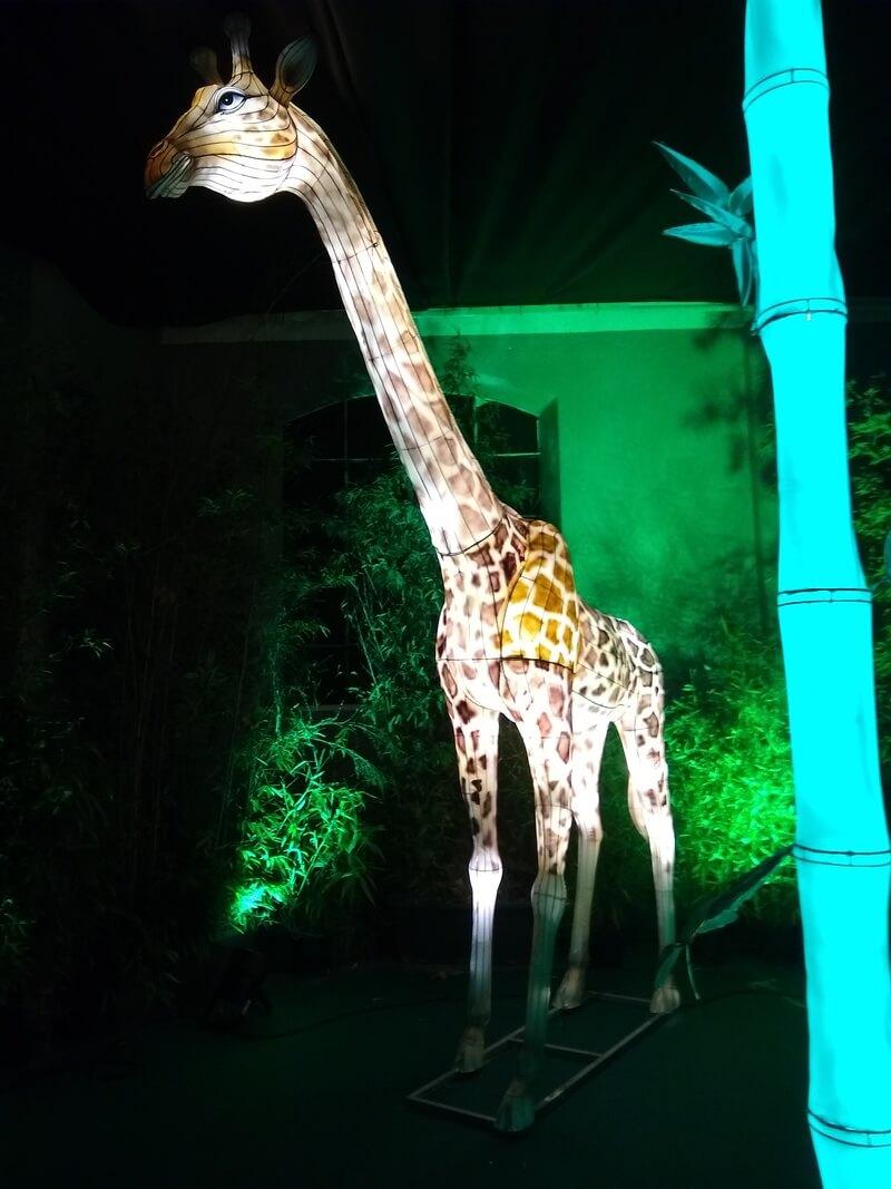 christmas wonderland zoo